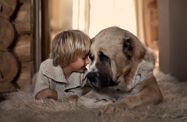 Dạy chó không cắn trẻ