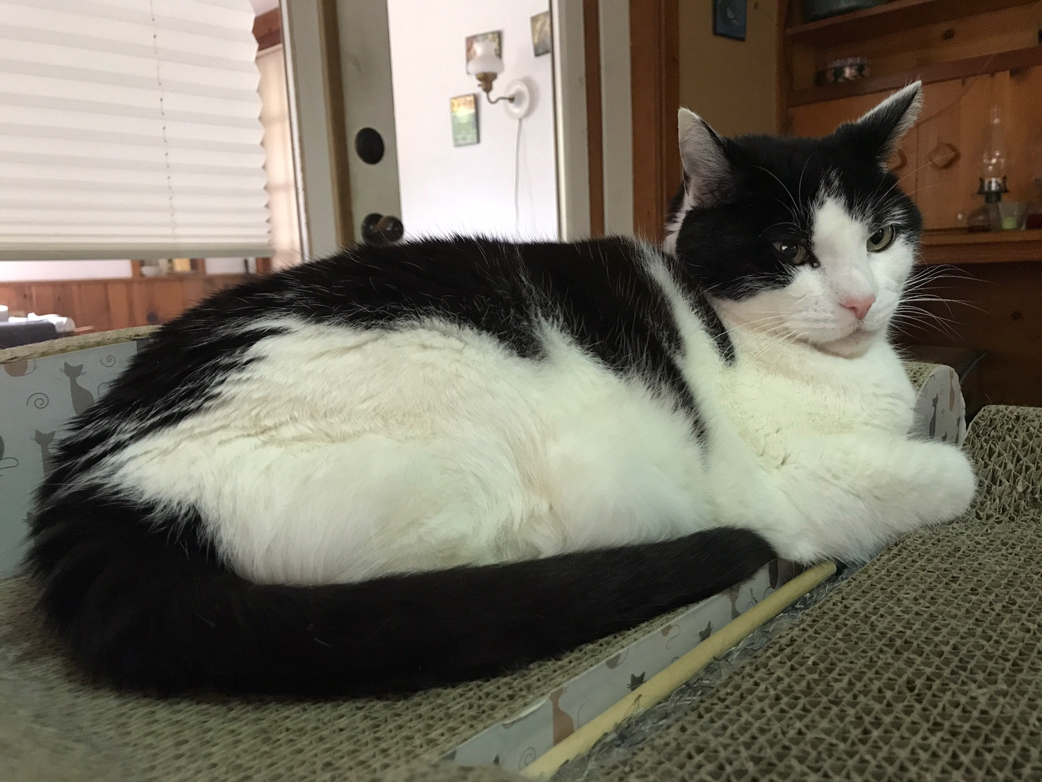 Cat chat with caren and cody an angel of a cat sofa scratcher bed - Cat bed scratcher ...