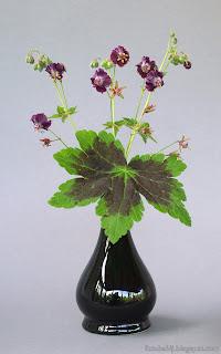 http://fotobabij.blogspot.com/2015/05/bodziszek-zaobny-kwiatostan-geranium.html