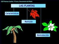 http://catedu.es/chuegos/kono/quinto/t2/plantas.swf