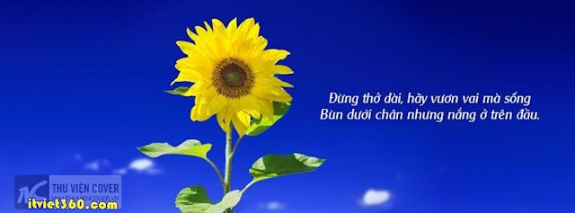 Ảnh bìa facebook đẹp độc đáo - Cover FB timeline enique, hoa hướng dương