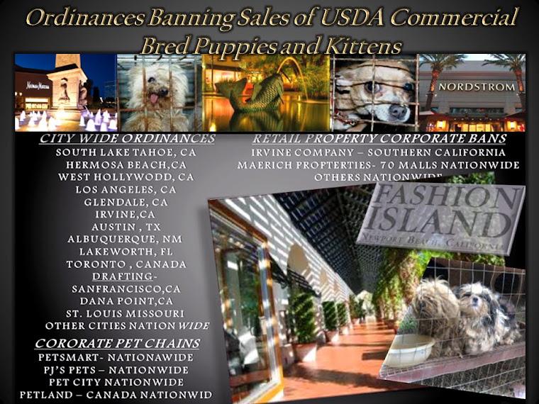 Newportbeachpuppymill com - Inhumane Newport Beach Pet Store