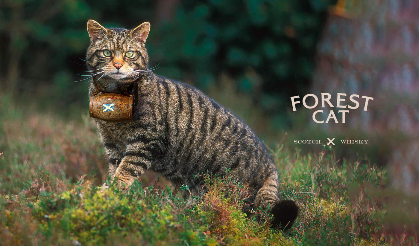 forest cat whiskey on