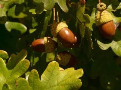 Οι άγριοι φαγώσιμοι καρποί δέντρων και θάμνων