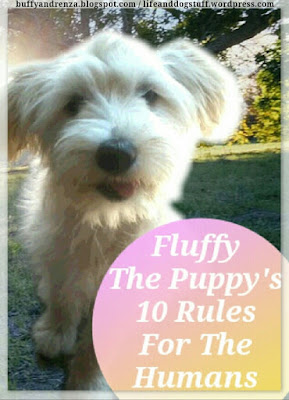 Fluffy The Puppy's 10 Rules For The Humans