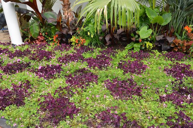 Et dekke av kløverplanter.