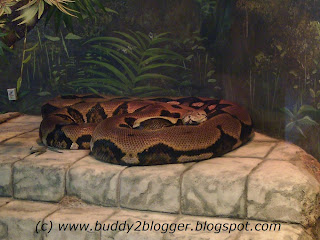 Reticulated Python image poster