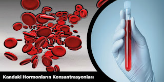 Kandaki Hormonların Konsantrasyonları