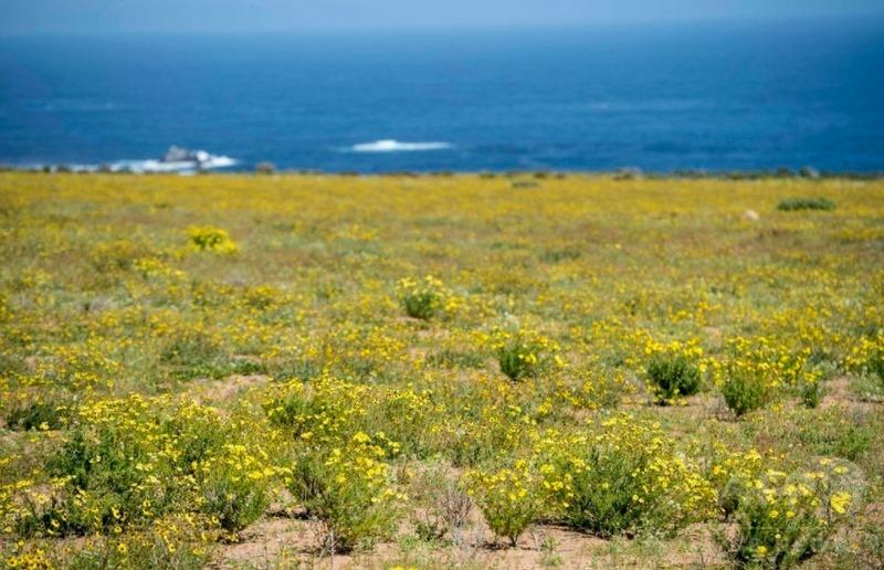 flores silvestres color amarillo