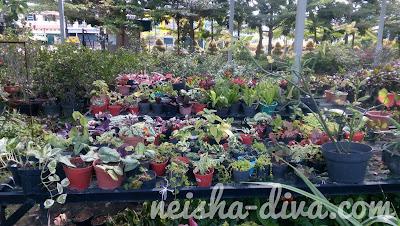 Vitka Gardenia. Foto: Rumah Bunga Neisha