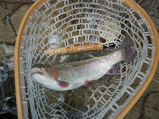 big rainbow trout swift river ma belchertown