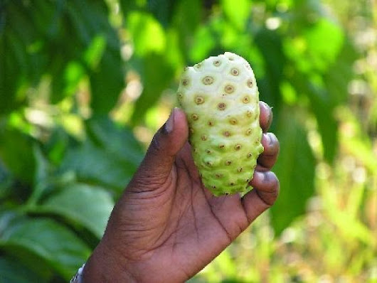 It's a Fruit, It's a Lotion, It's a Skin Saver: Noni to the Rescue