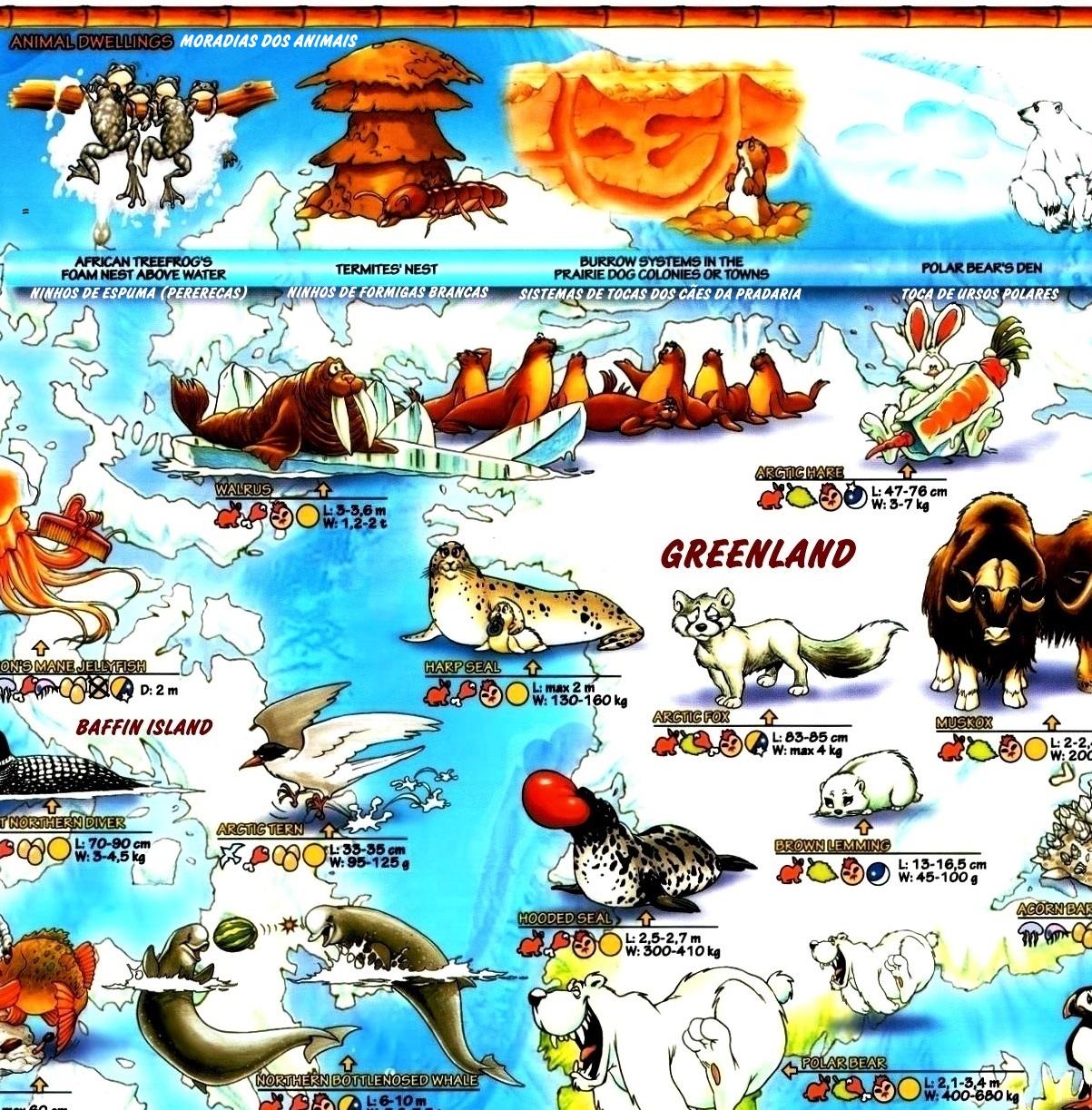 mapa decoracao animais infantil aprender