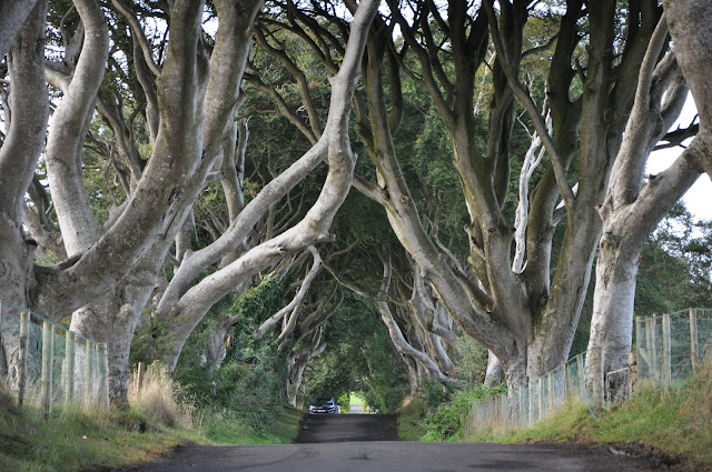 Game of Thrones Filming Locations, The Dark Hedge, Northern Ireland, UK