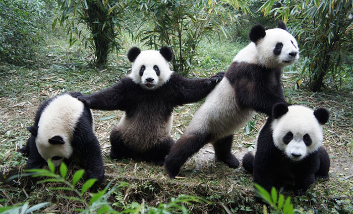32 Animals That Look Like They're About To Drop The Hottest Albums Of The Year - Wu-Pand Clan
