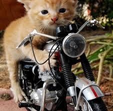 صور قطط مضحكة