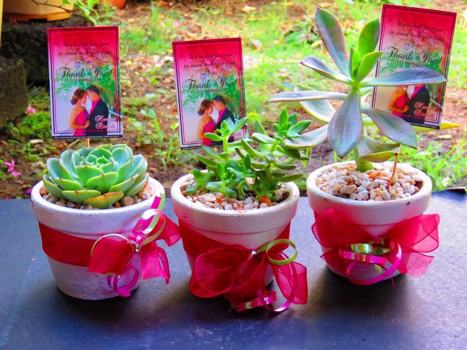 Cebu urbano succulents cebu why you should start for How much sunlight do succulents need