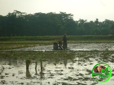 """Mang Sadwi sedang """"ngabaladah"""" menggunakan traktor"""