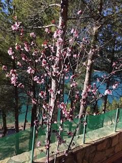 Pantano de Pena, fotos de Corinne Buchmann, flores
