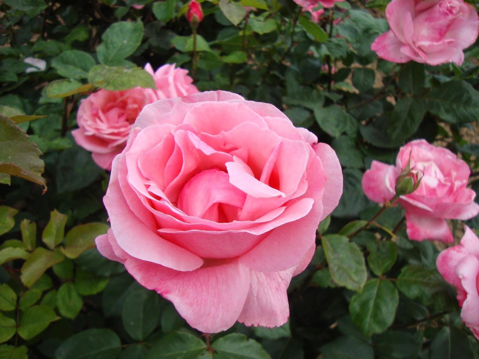 Un piccolo giardino in citt mi serve una pausa - Il giardino di elizabeth ...