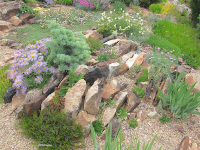 Crevice rock garden, Fort Collins, CO