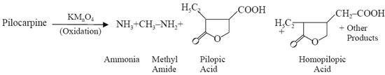 Kmno4-oxidation yields ammonia, methyl amine, pilopic acid, homopilopic acids