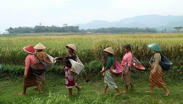 APB Desa - Penganggaran Keuangan Desa