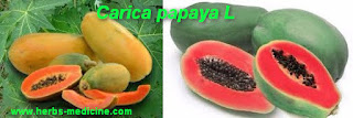 Breastfeeding use papaya