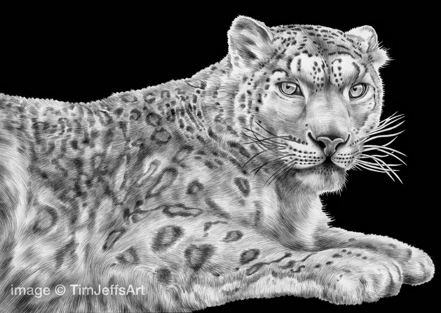 22-Snow-Leopard-Tim-Jeffs-All-Creatures-Great-and-Small-Ink-Drawings-www-designstack-co