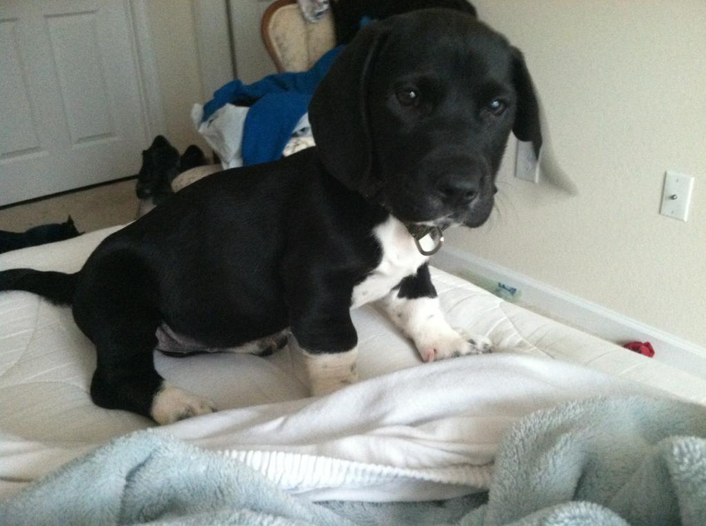 Cute dog - part 113, cute dog pictures, best dog photos, dog photo album