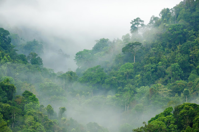 Long-term fate of tropical forests may not be as dire as believed, says study