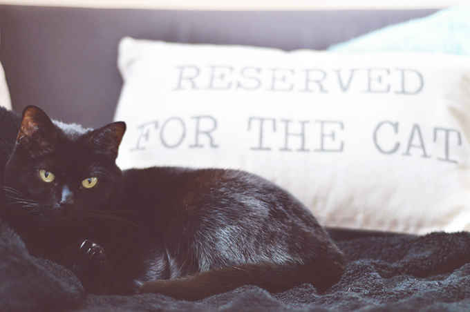 Reserved For The Cat (& other things)