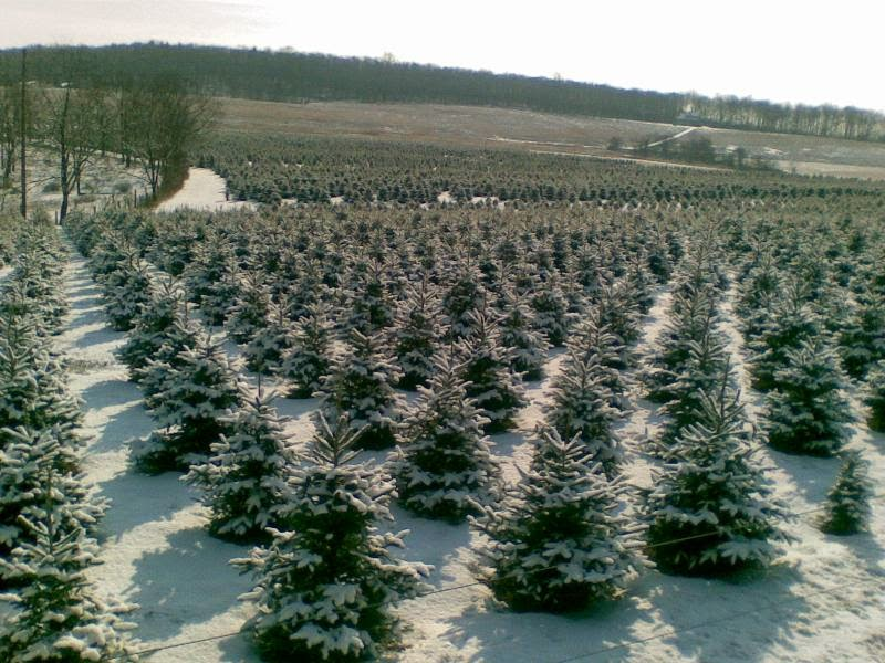The 'Scope: O Christmas Tree: It's Not Easy Being Green
