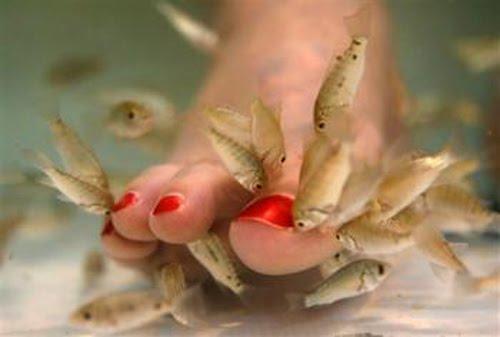Eat my feet