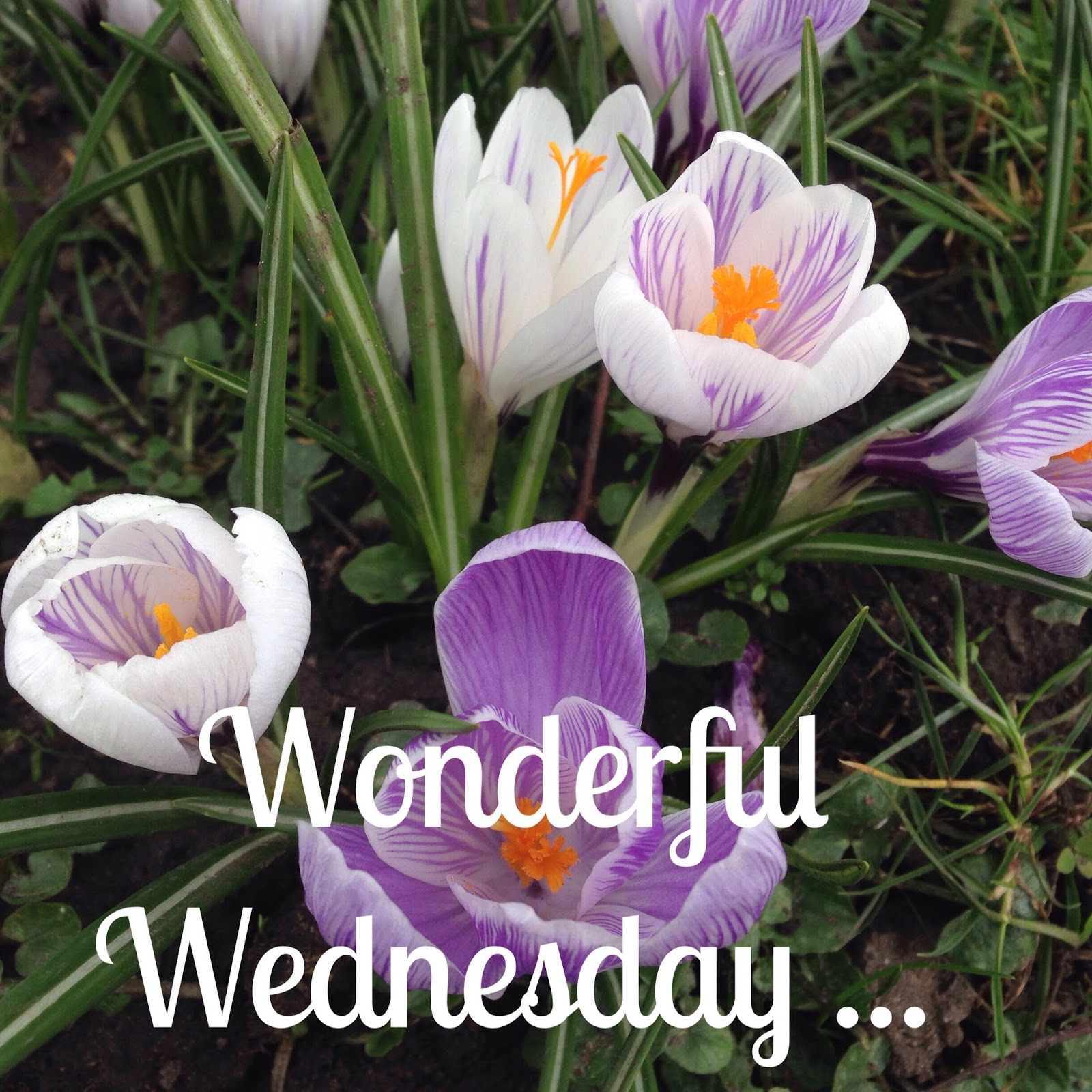 The Perfect Hiding Place Wonderful Wednesday 1