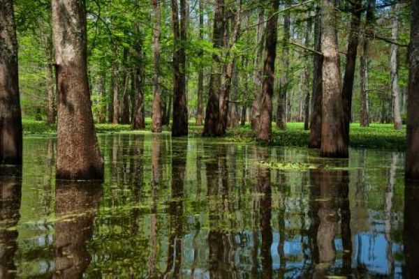 Most Beautiful Swamps In The World