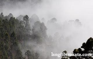 Foggy - Berkabut