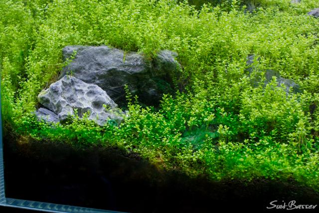 藍藻の駆除
