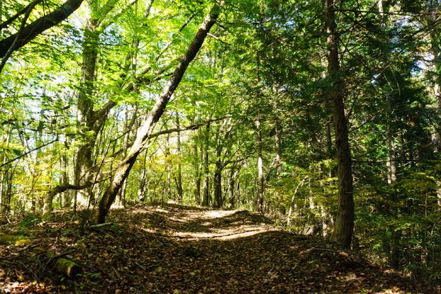 東海自然歩道~大平山ハイキングコース