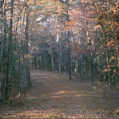 autumn leaves on trees and covering forest road