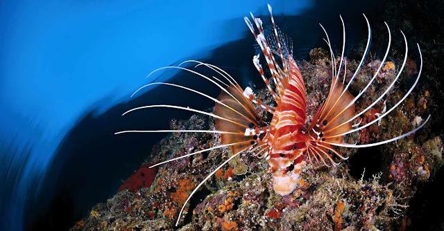 Biologia marina y ramas de la biologia