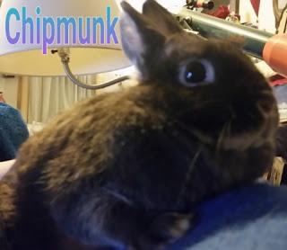 chipmunk bunny