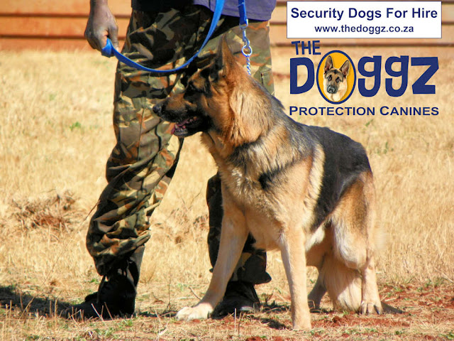 guard with security dog - The Doggz - www.thedoggz.co.za
