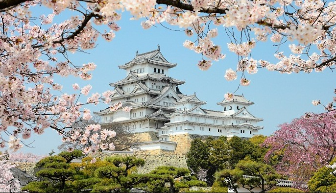 cherry blossoms in Tokyo