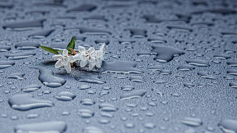 Rain Drops and White Flowers