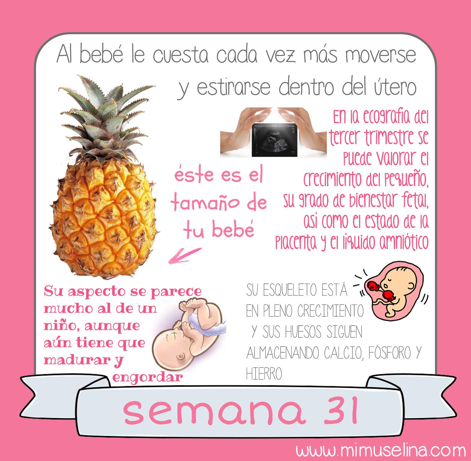 b3acd7b1d Tamaño y evolución del bebé  mimuselina. tu bebe semana a semana libro  diario album recuerdos embarazo semana 31 feto tamaño comparativa frutas