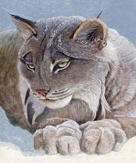 Cat-Opedia | Questions about the mysterious creature known ... |Lynx Cat Family