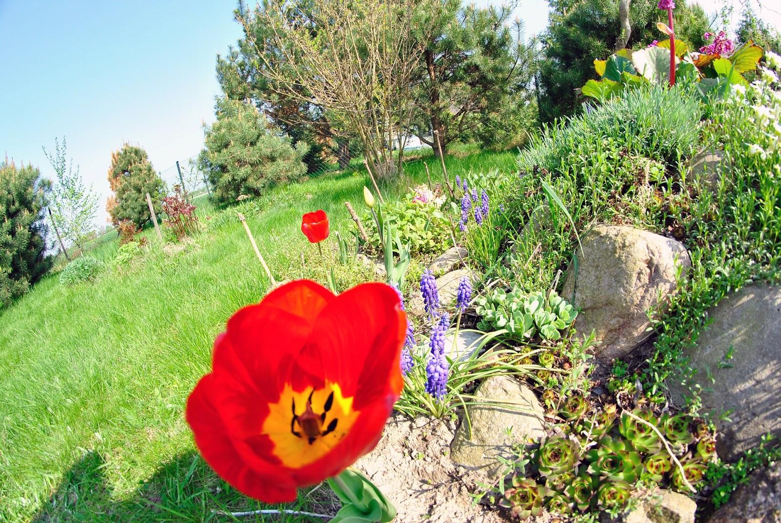 Gartengestaltung: Ideen mit Steinen