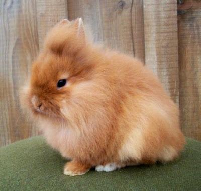 Cara Merawat Kelinci untuk Pemula