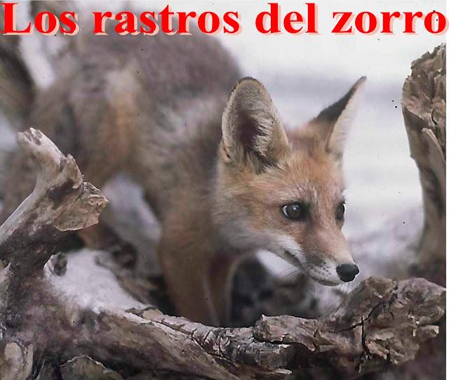 Los rastros del zorro